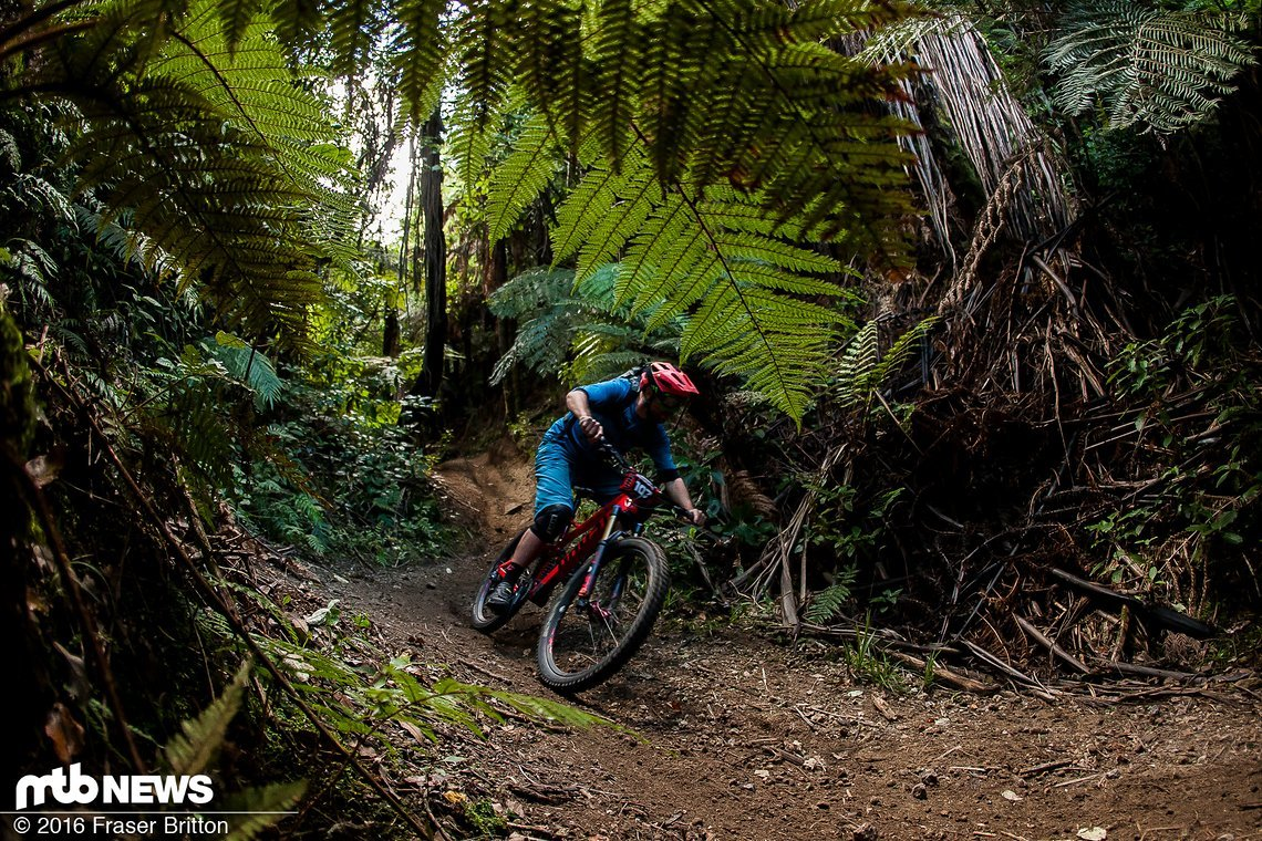 Maxi in den Wäldern Neuseelands