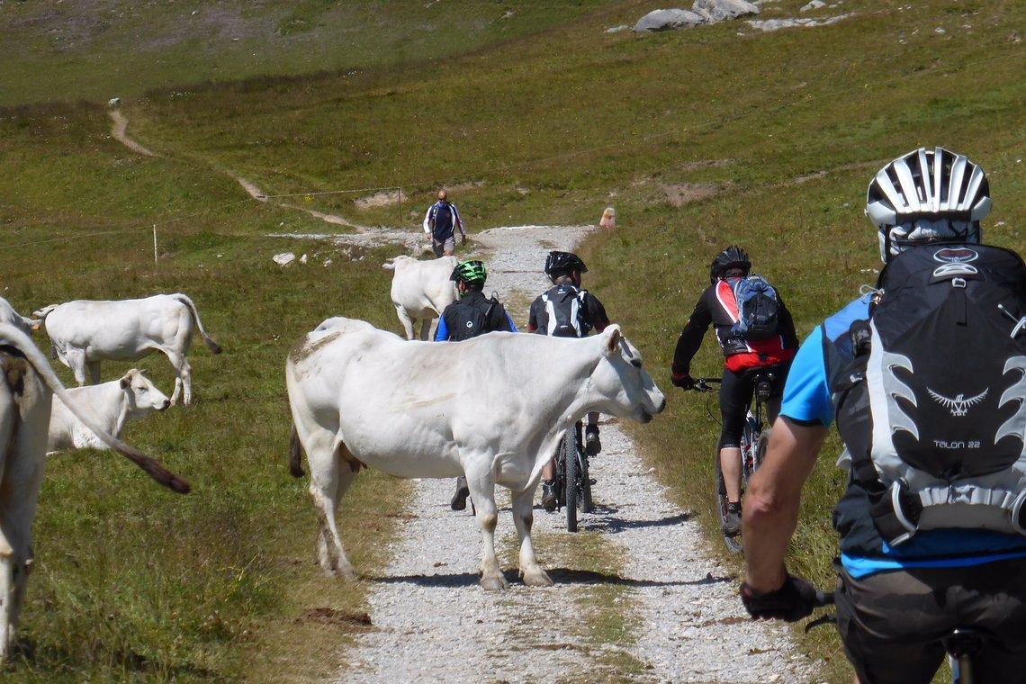 Hinter dem Refugio geht es auf Schotterpiste auf 2620m zum Rocca Brancia.