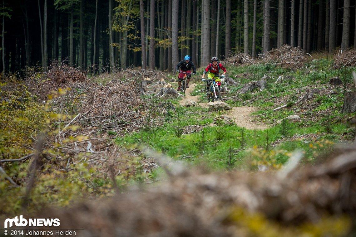 Offene Waldsektion auf Stoupavá