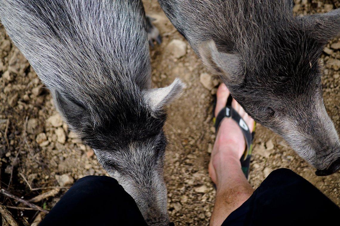 Wenn wir abends müde und hungrig zum Bus zurück kommen, warten auch andere Mäuler, die gestopft werden wollen. Wir kümmern uns für ein paar Tage um die kleinen Wildschweinchen von Tristan und Anja.