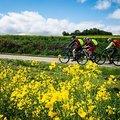 MTB-Eifelcross / Transeifel 'Shorty' (3-tägig)