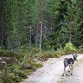 MTB/E-MTB-Midsommer in Finnisch-Lappland