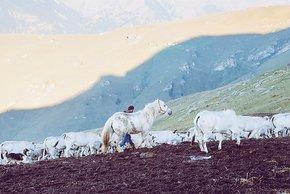 Bauern, hoch oben auf einer Bergpassstraße
