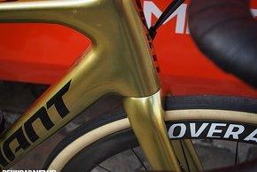 Roubaix Probikes 2019-56