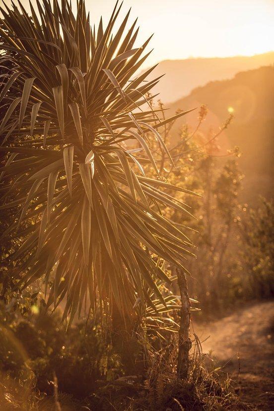 Palmen und Meer...