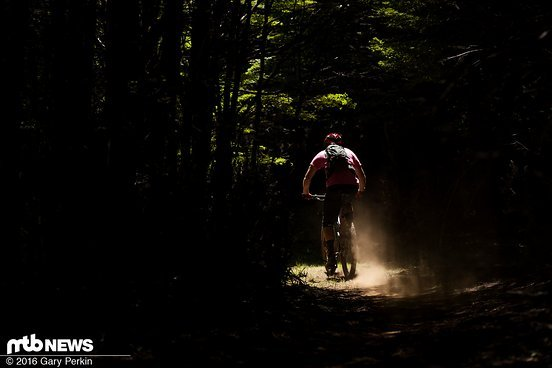 ...und Wäldern