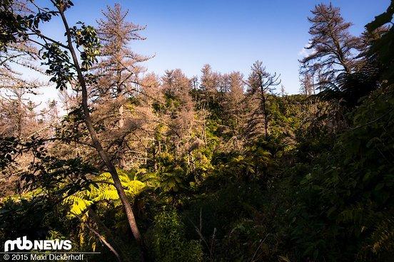 Ein Blick in Neuseelands Urwald.