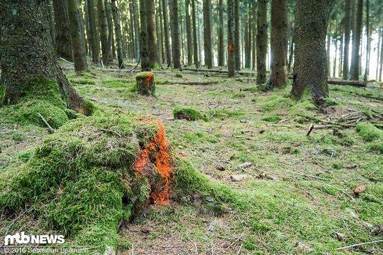 Im Wald lässt ein angenehmes Gefälle ...