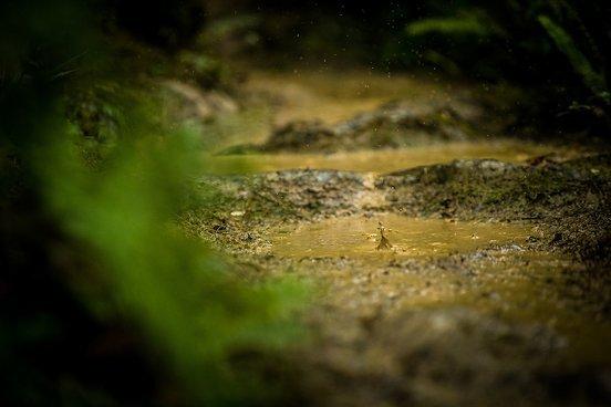 Wasser gab es beim NZ Enduro in der einen …