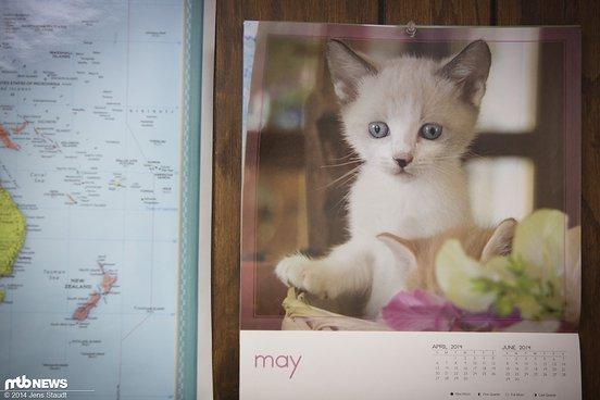 ...die gut mit dem Kätzchen-Kalender zusammen passen.