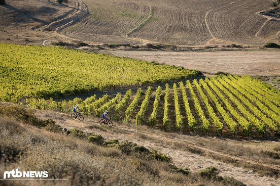 In Meerendal ging es durch die Weinplantagen